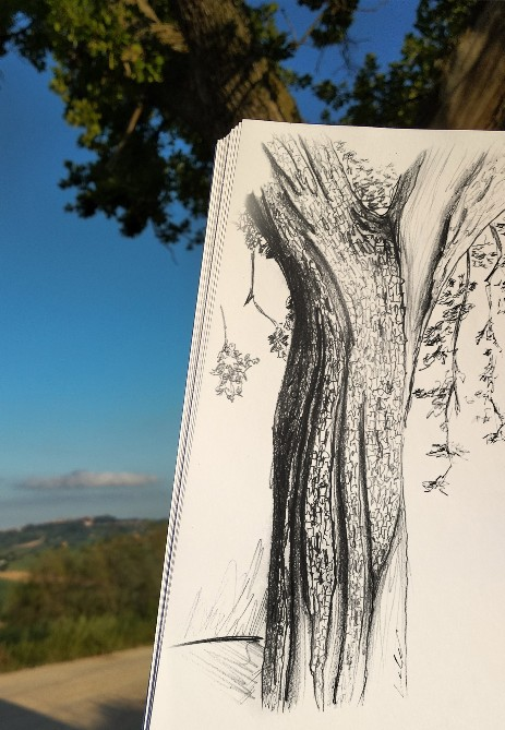 nature sketch with background